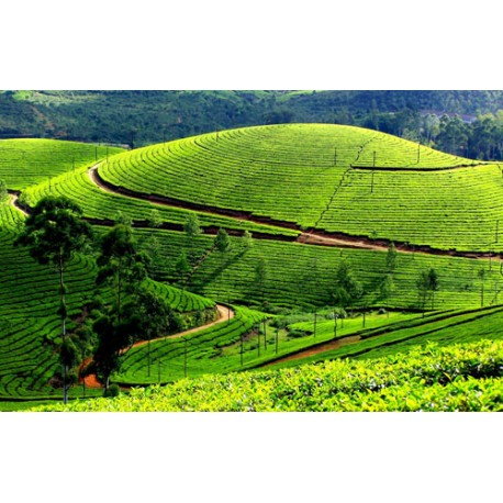 Ooty with Kodaikanal and Munnar - 6N / 7D