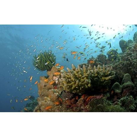 Andaman Getaways - 6N / 7D