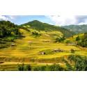 Vietnam Delight - 3N / 4D