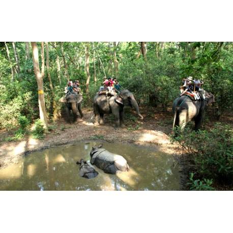 Wildlife Tour Nepal - 7N / 8D