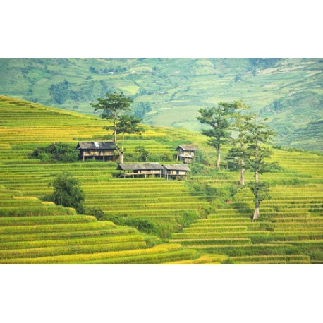 Traditional Bali Ubud - 3N / 4D